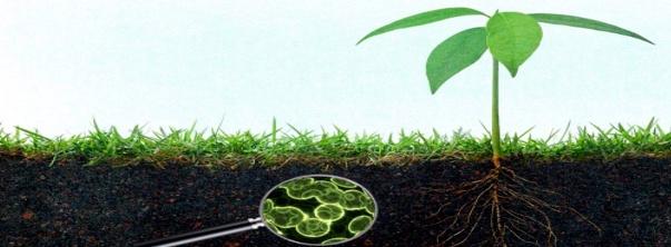 Biofertilizantes en la agricultura, Ecoferti