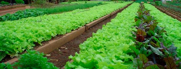 Biofertilizantes en la horticultura agrícola, Ecoferti