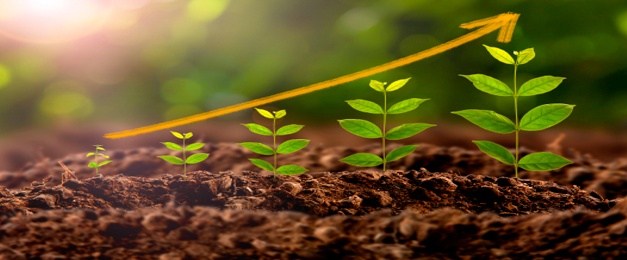 Efecto hormonal en el crecimiento y desarrollo vegetal, Ecoferti
